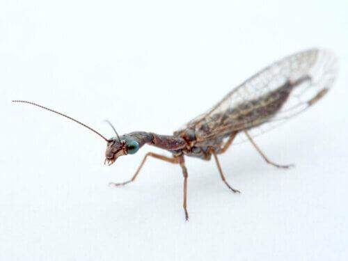 Il curioso caso degli insetti controllori di parassiti