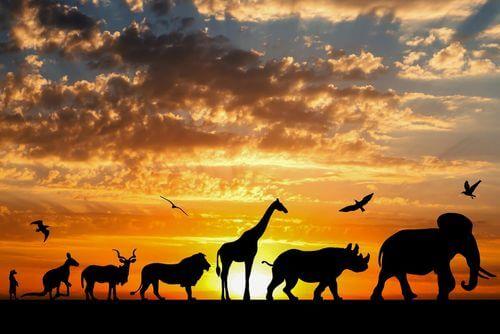 Sagome di animali al tramonto, teoria Lamarckismo.