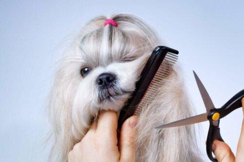 È utile tagliare il pelo dei cani a causa del caldo?