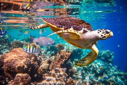 Le correnti oceaniche condizionano la fauna marina, come?