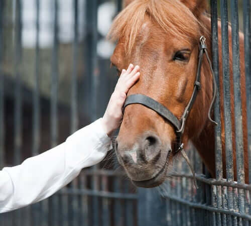 Adottare un cavallo: tutto quello che dovete sapere