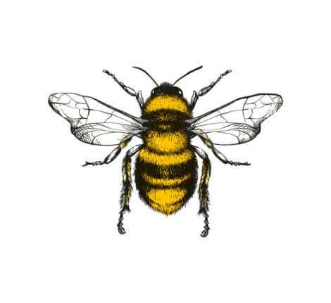 Disegno di un'ape.