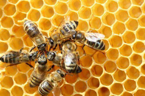 La danza delle api e il suo linguaggio segreto