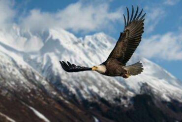 Rapaci diurni, caratteristiche dei predatori dei cieli