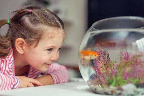 Bambina che guarda il suo pesce rosso.