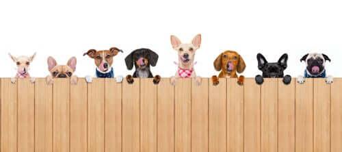 Come organizzare recinti e barriere per il cane