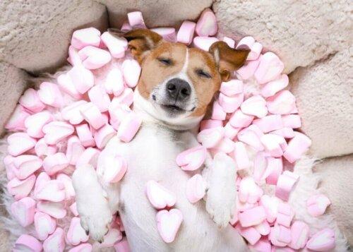 I dolci sono pericolosi per i cani? Dipende