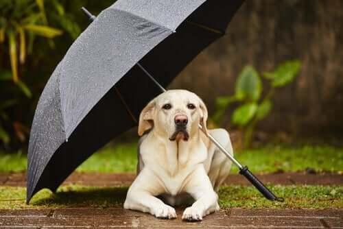 Cane che si ripara dalla pioggia sotto un ombrello.