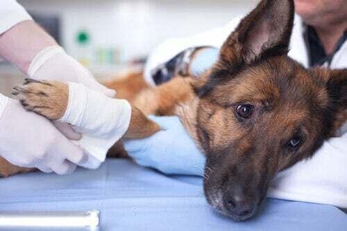 Benefici della chiropratica per gli animali