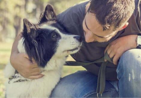 Malattie dell'apparato riproduttivo del cane: padrone che parla al proprio animale.