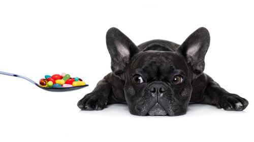 Quali vitamine sono essenziali per i cani?