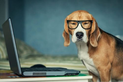 I social network condizionano la comprensione sugli animali.