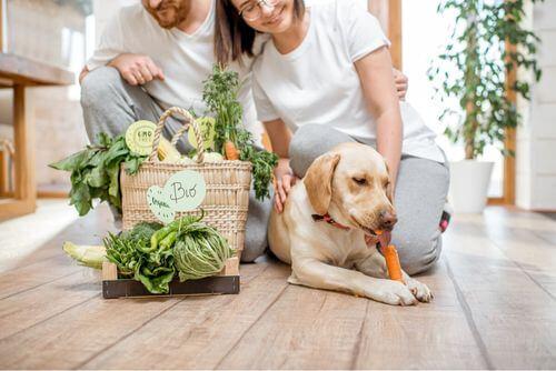 Cane mangiando vitamine attraverso una carota.