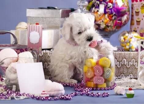 I dolci sono pericolosi per i cani: è importante controllare il loro consumo.