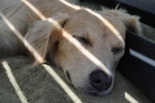 Cane che dorme all'ombra.