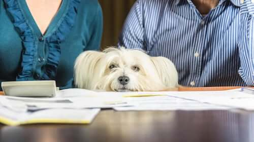 Cane stressato tra i suoi padroni.