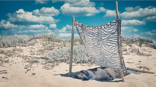 Cane al riparo dal sole in spiaggia.