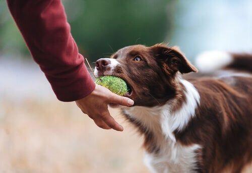 Tra le cose divertenti che fanno i cani, riportare la palla.