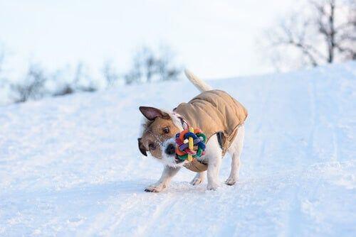 Cane che scuote freneticamente un giocattolo.
