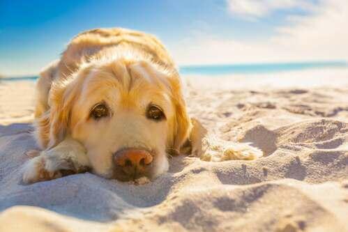 Il rischio della dermatite solare negli animali domestici