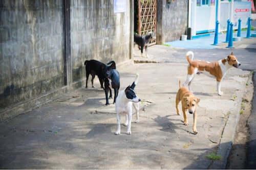La storia di Leia e dei suoi cani dopo l'esplosione di Beirut