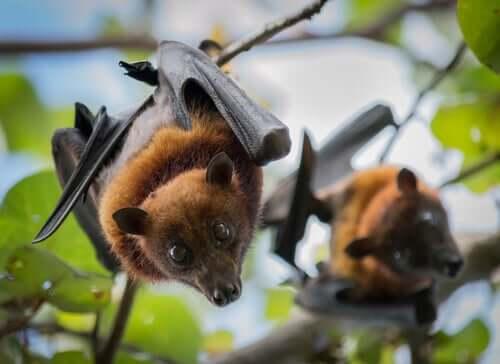 Mammiferi volanti: caratteristiche e curiosità