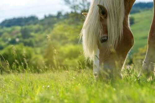 Cavallo che mangia l'erba.