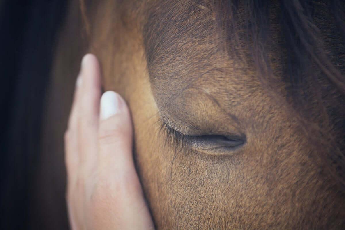Un cavallo triste riceve una carezza.