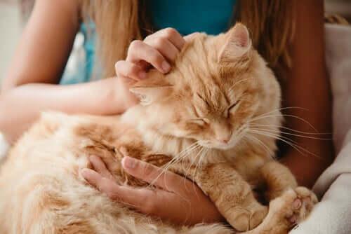 Demenza senile nel gatto: sintomi e trattamento