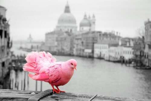 Inquinamento acustico, acerrimo nemico degli uccelli