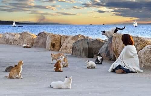 Gruppo di gatti che riposano nel lungomare.
