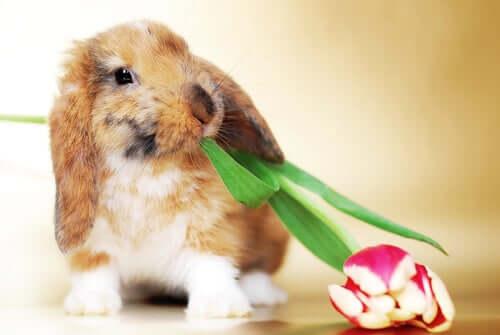 Un coniglio con fiore in bocca.