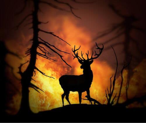Incendi boschivi: le conseguenze per gli animali