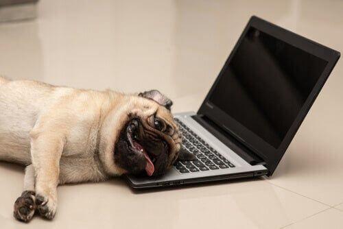 Cose divertenti che fanno i cani che ci fanno ridere