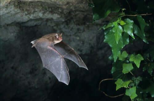 Curiosità dei mammiferi volanti.