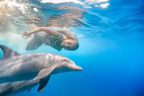 Bambina che nuota con dei delfini.
