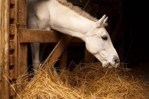 Dieta del cavallo: i benefici di una corretta alimentazione