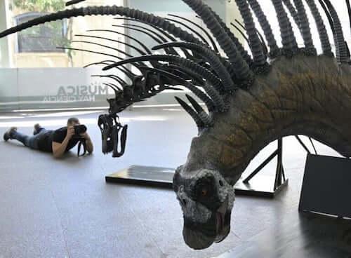Scheletro di un Bajadasaurus pronuspinax esposto in un museo.