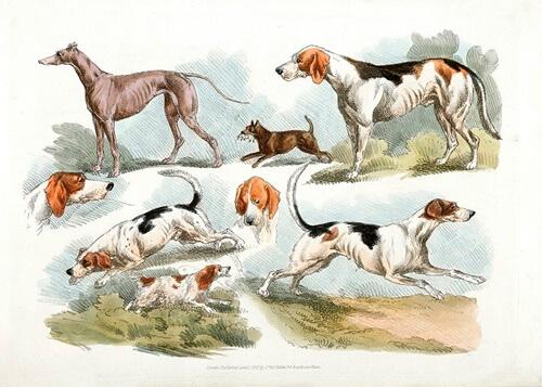 Sapevate che a New York esiste un Museo del Cane?
