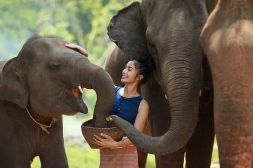 Donna che dà da mangiare agli elefanti.