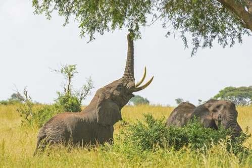 Cosa mangiano gli elefanti in cattività?