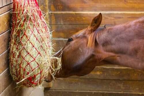 Fieno per cavalli.