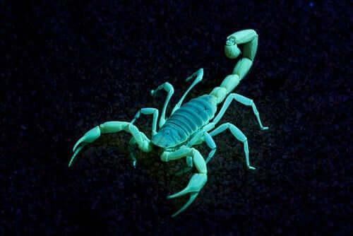 La fluorescenza dello scorpione.