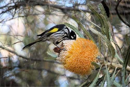 Foto di un uccello su un ramo.