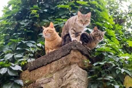 I gatti all'aria aperta sono maggiormente esposti ai pericoli.