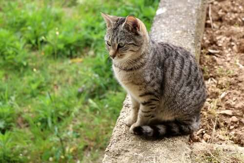 Lasciar uscire i gatti all'aperto: come farlo in sicurezza