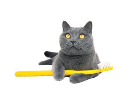 Gatto con spazzolino da denti tra le zampe.
