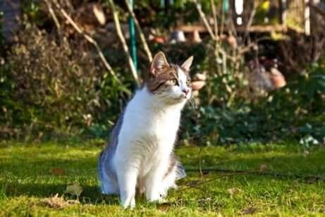 Gatto in un giardino.