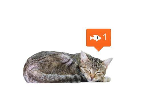 Come i social network cambiano la nostra percezione degli animali