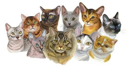Illustrazione razze di gatti.